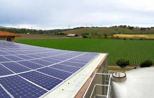 Solar for Wineries