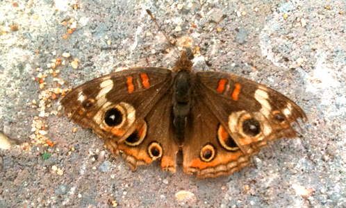 a cool butterfly on a solar electric install in Atascadero.